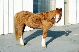 FREE Blood test diagnosis for Equine Cushings PPID