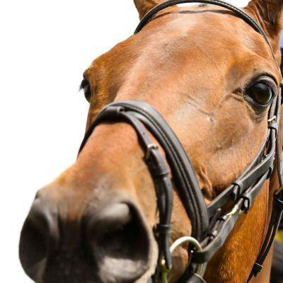 Selenium Deficiency in Horses